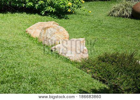 Fresh Summer Green Grass Garden stock photo