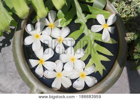 White Flowers Group On Water Bowl stock photo