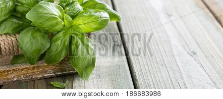 Fresh organic green basilic leaves on a wooden table. for healthy cooking, herbs and spices concept with copy space.