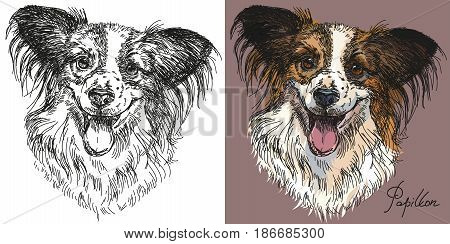 Vector Portraits of black and white and colorful on pink background dog Papillon hand drawing Illustration