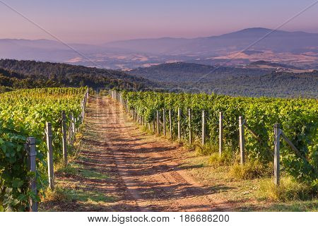 Dirt Road Through Chianti Vineyard
