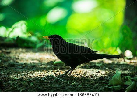 Bird forest wild animal beak wildlife black orange