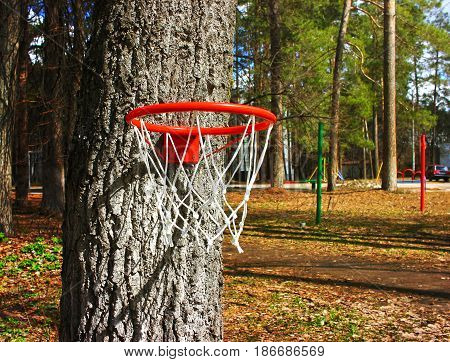 Basketball ring in the spring day on the tree, park holidays