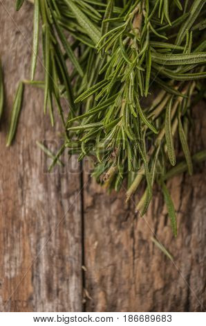 Organic bunch of fresh rosemary on the table