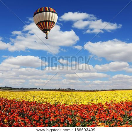 The multi-color balloon slowly flies over blossoming fields of garden buttercups. Concept of extreme and rural tourism. Light clouds portend a warm day