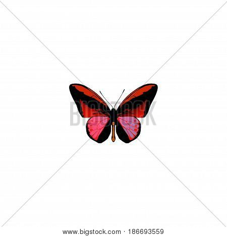Realistic Agrias Claudina Element. Vector Illustration Of Realistic Callicore Cynosura Isolated On Clean Background. Can Be Used As Butterfly, Red And Cynosura Symbols.