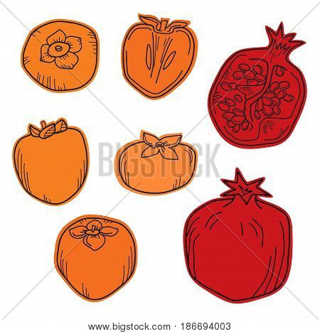 Natural organic pomegranate and persimmons for decorative poster or emblem. Color isolated vector illustration.