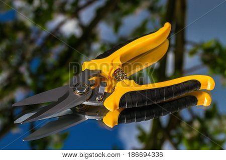 new garden scissors on a mirror background