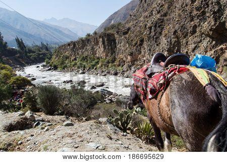 Mule on the Inca Trail along Vilcanota River, Peru