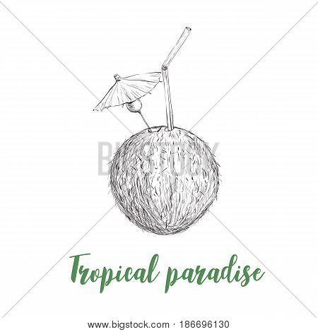Coconut sketch illustration vector. Coconut beach cocktail. Letthering tropical paradise card