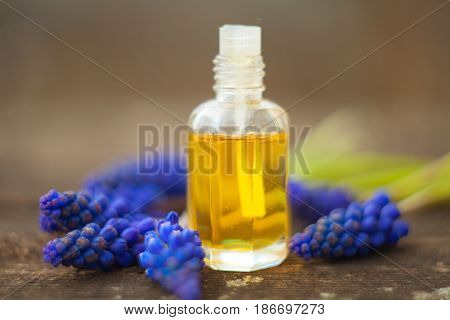 Essential Oil Of Muscari Flower On A Table In Beautiful Bottle