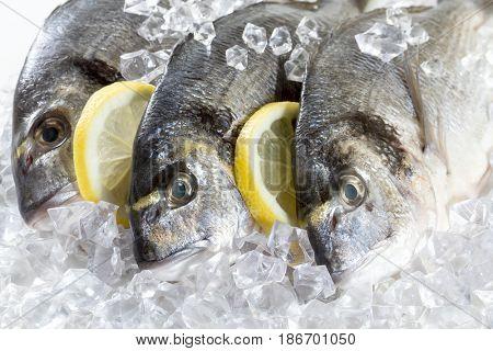 Fresh Dorado with lemon on ice