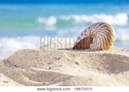 concha de Nautilus, numa praia de areia, contra ondas do mar, dof raso