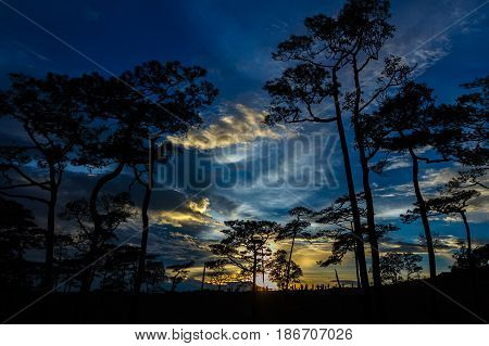 silhouette landscape with pine forest at Phu Soi Dao national park Thailand