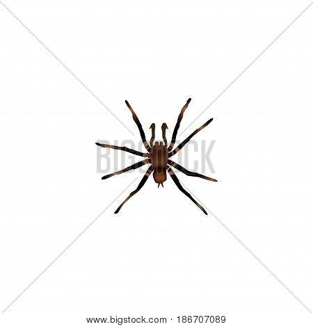 Realistic Tarantula Element. Vector Illustration Of Realistic Arachnid Isolated On Clean Background. Can Be Used As Arachnid, Tarantula And Spider Symbols.