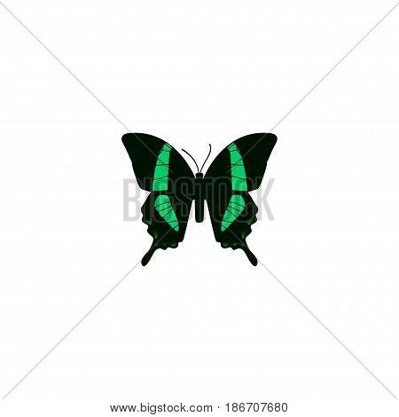 Realistic Tropical Moth Element. Vector Illustration Of Realistic Beauty Fly Isolated On Clean Background. Can Be Used As Tropical, Butterfly And Fly Symbols.