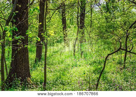 The beauty of the forest the green grass brightly lit by the sun trees around clean and no one around