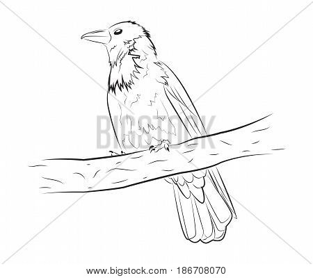 The crow sits on a branch. Vector illustration sketch