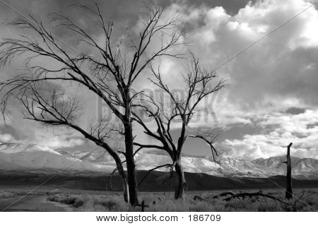 Bishoptrees