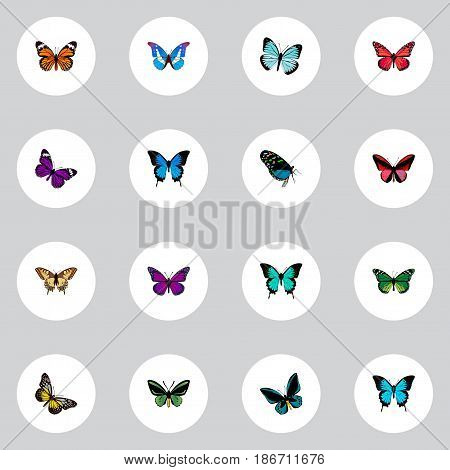Realistic Demophoon, Birdwing, Papilio Ulysses And Other Vector Elements. Set Of Beauty Realistic Symbols Also Includes Sky, Tiger, Blue Objects.