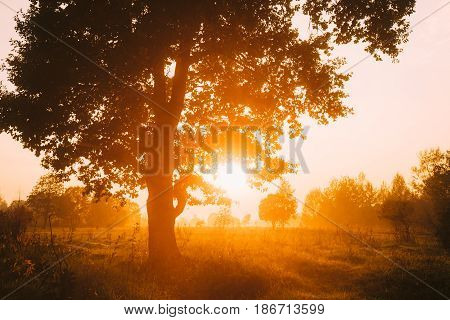 Sunset Or Sunrise In Misty Forest Landscape. Sun Sunshine With Natural Sunlight Through Oak Wood Tree In Morning Forest. Beautiful Scenic View. Autumn Nature Of Belarus Or European Part Of Russia