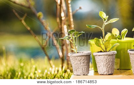 Young plants in sunlight, Growing plants, Plant seedling