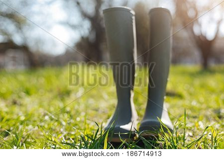 Real gardeners attire. Classic gardener wellies for gardening and taking care of nature standing in a country house yard