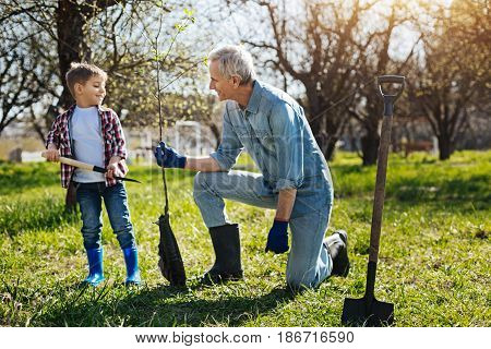 Taking care of nature. Little child helping his smiling granddad to plant a new fruit tree in a country house yard