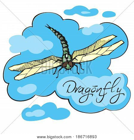 Hand drawn ink vector illustration of dragonfly sketch style isolated on white background. Flying dragonfly with transparent wings.Insect flies against the sky with clouds.