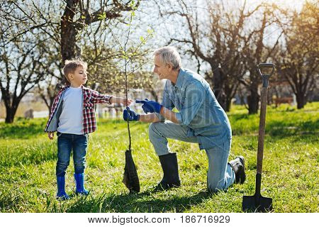 Looking after family garden. Grandfather and a kid both enjoying the gardening process and setting a new fruit tree in a spring sunny day
