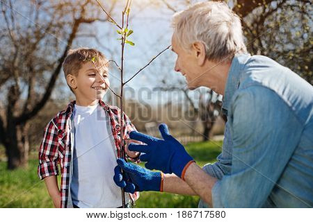 Enjoying family time. Team of grandfather and grandson grinning broadly while planting a new fruit tree in a backyard in spring