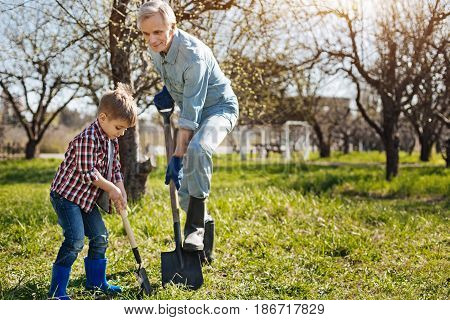 Gardening is a recreation. Wonderful family activity. Grandfather wearing navy blue garden gloves spending free time with his little grandchild outdoors while gardening together