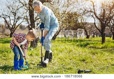 Real men labour. Granddad and his grandson both wearing rubber boots enjoying spring days while working in a garden and digging a hole in the ground