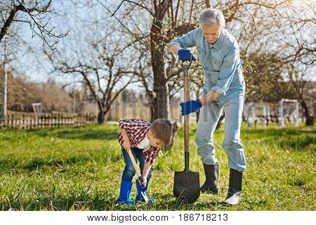 Team work. Two male generations working in a family garden and scooping the soil for a new fruit tree in spring