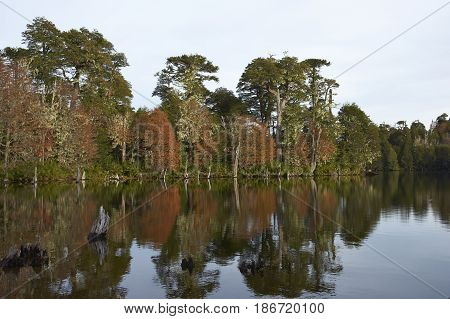Trees in autumn foliage reflected in the still waters of Laguna Captren in Conguillio National Park in Araucania, southern Chile.