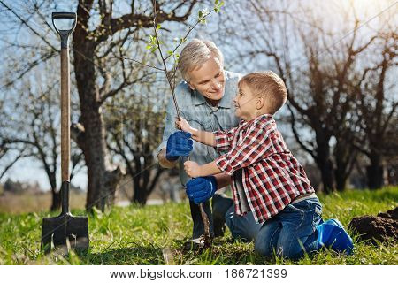 Little helper. Smiling senior farmer standing on a knee while teaching his cute little grandson how to plant trees in a family garden