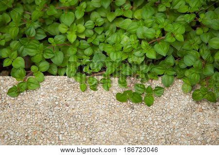 green leafs nature background and gravel stone terrazzo floor