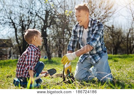 Teaching process. Father and son both wearing plaid shorts smiling while setting a new tree in a family garden