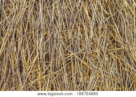 Sheaf of straw closeup. Vegetable natural texture stack of straw agricultural fodder billet.