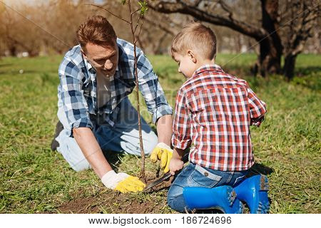 Maintaining family garden. Father and son both standing on knees enjoying the gardening process and looking after a newly planted tree