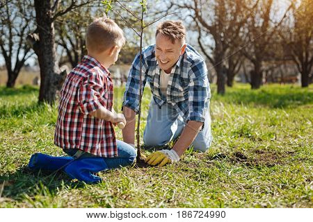 Real gardeners. Team of father and son grinning broadly while planting a new fruit tree in a backyard in spring