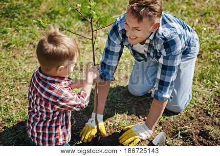 True men work. Little boy helping his smiling dad to plant a new fruit tree in a country house yard