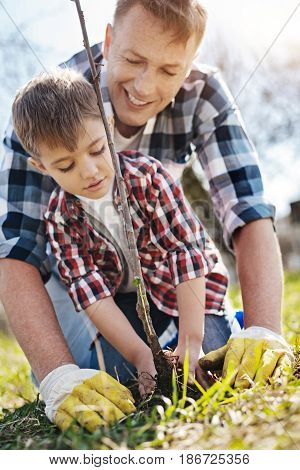 Little helper. Father and son both wearing plaid shirts standing on their knees and planting an apple tree