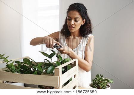 Young beautiful african female botanist cutting plant stems at workplace. Copy space. White wall.