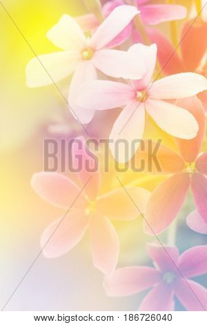 Soft blur flower in pastel colors sweet background