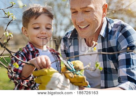 Teaching process. Radiant father and son looking after the trees by cutting the branches in a backyard garden
