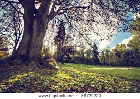 man sits under big tree in park on sunset and working on laptop