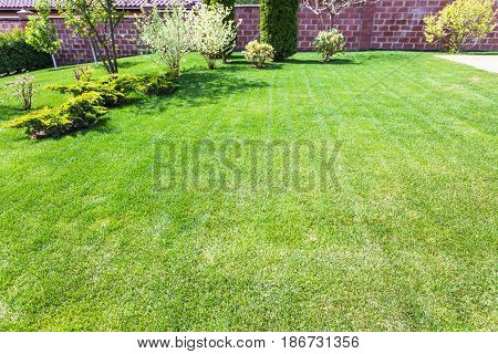 Well-groomed Lawn With Decorative Bushes