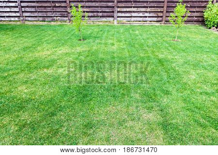Clipped Lawn With Young Trees Near Wooden Fence