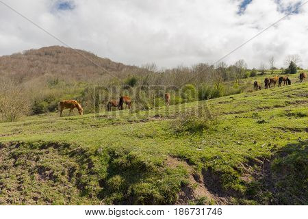 Near The Village Of Fontibre In Cantabria
